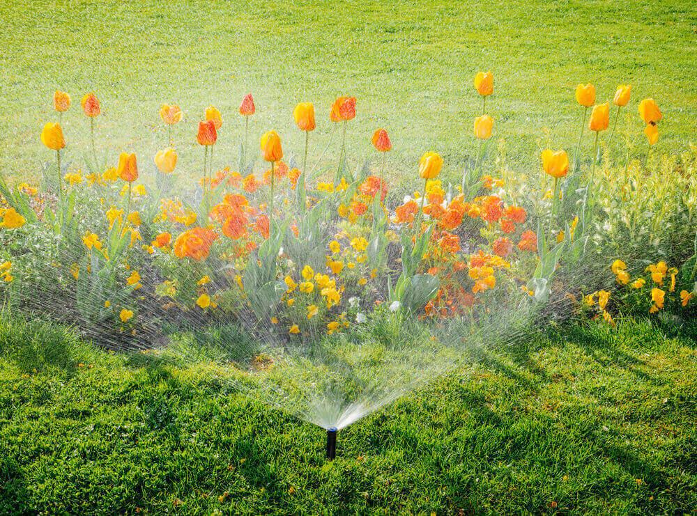 irrigation goutte à goutte - vent