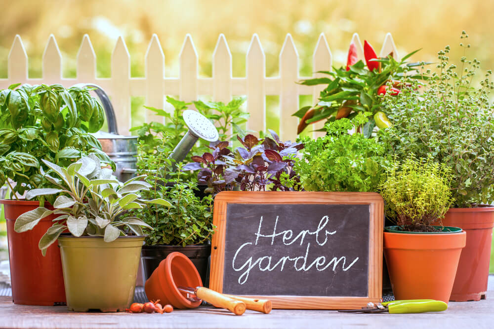 jardin d'herbes d'été