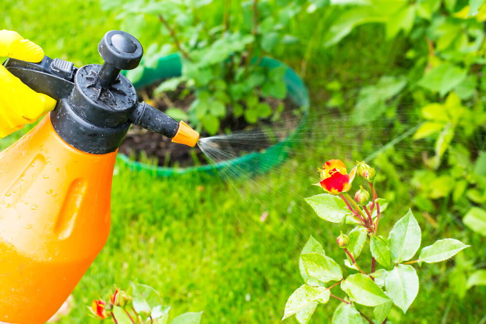 Organic Pest Control Plant Spray