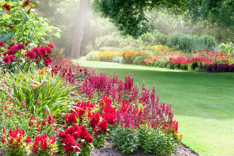 herbe libre d'allergie et herbes libres d'allergie