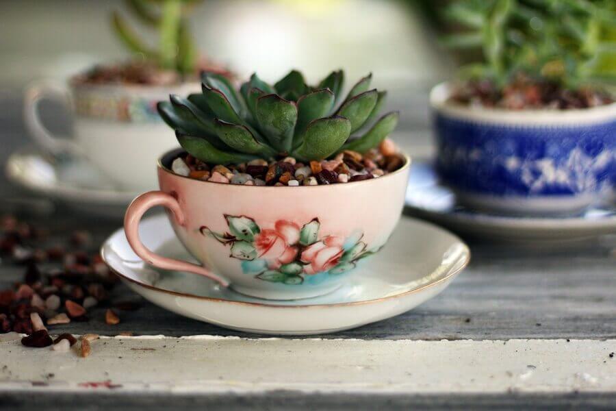 Ensemble de tasse à thé succulentes et cailloux Old World