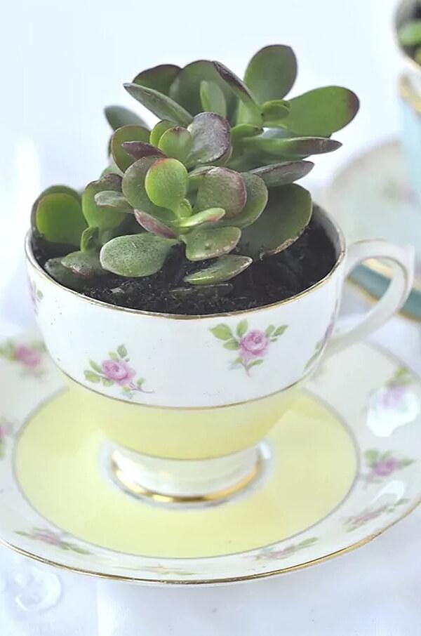 Tasse à thé succulente florale délicate et délicate