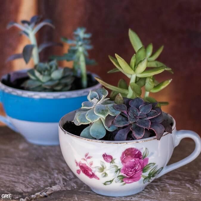 Une tasse de bonté de jardin succulentes