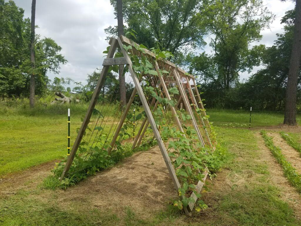 Un beau treillis de jardin encadré