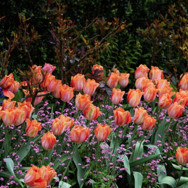 Les meilleurs jardins britanniques, des zones rurales aux paradis botaniques du centre-ville