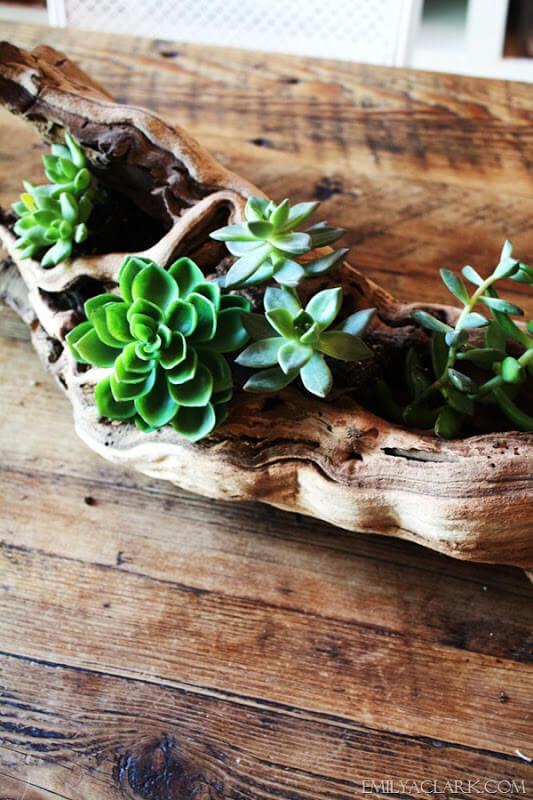 Le bois flotté gracieux fait une belle jardinière