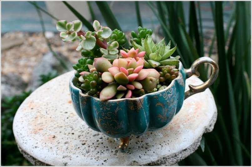 Plantes succulentes dans un vieux bol à pieds