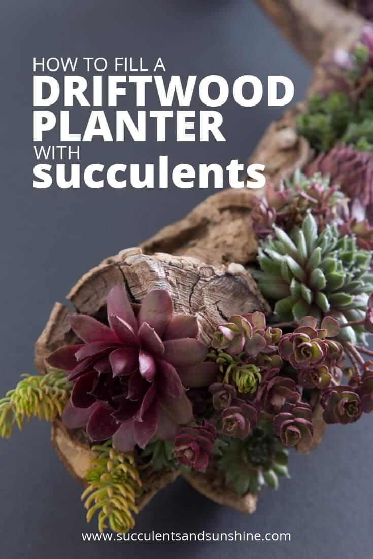Idée de jardinière succulente bricolage avec bois flotté