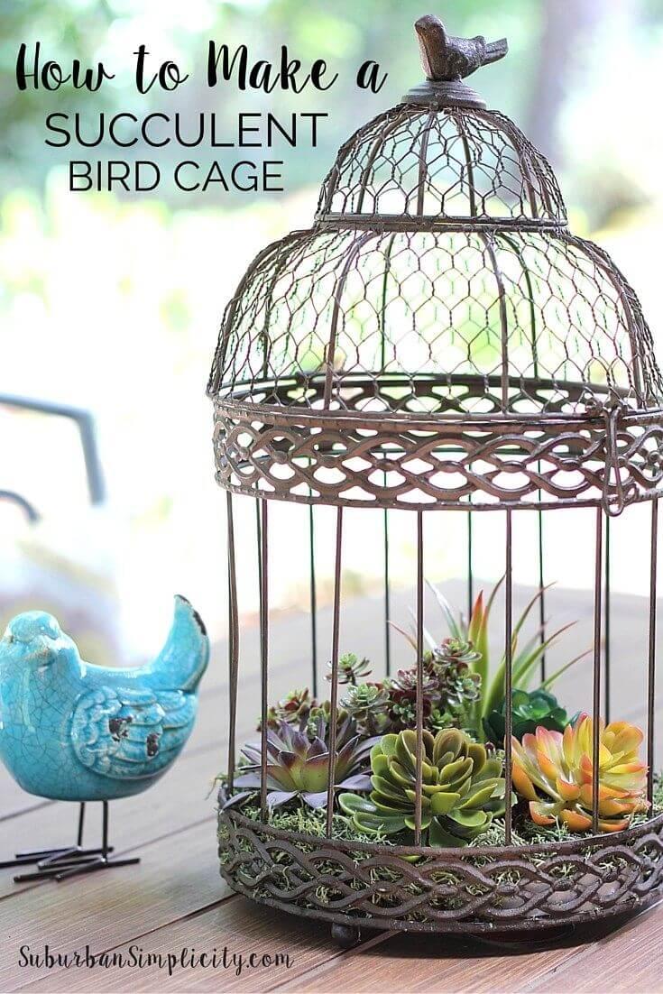 Remplissez une cage à oiseaux antique avec des plantes succulentes