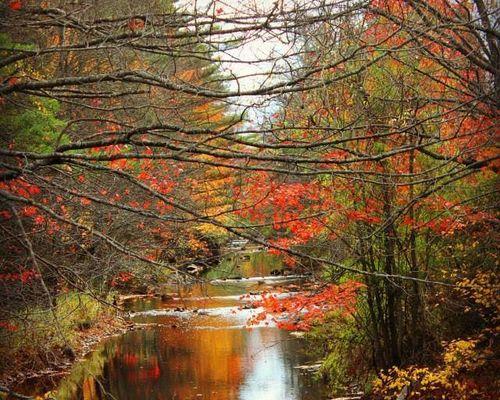 Bienvenue l'automne avec 8 scènes pittoresques de la belle saison