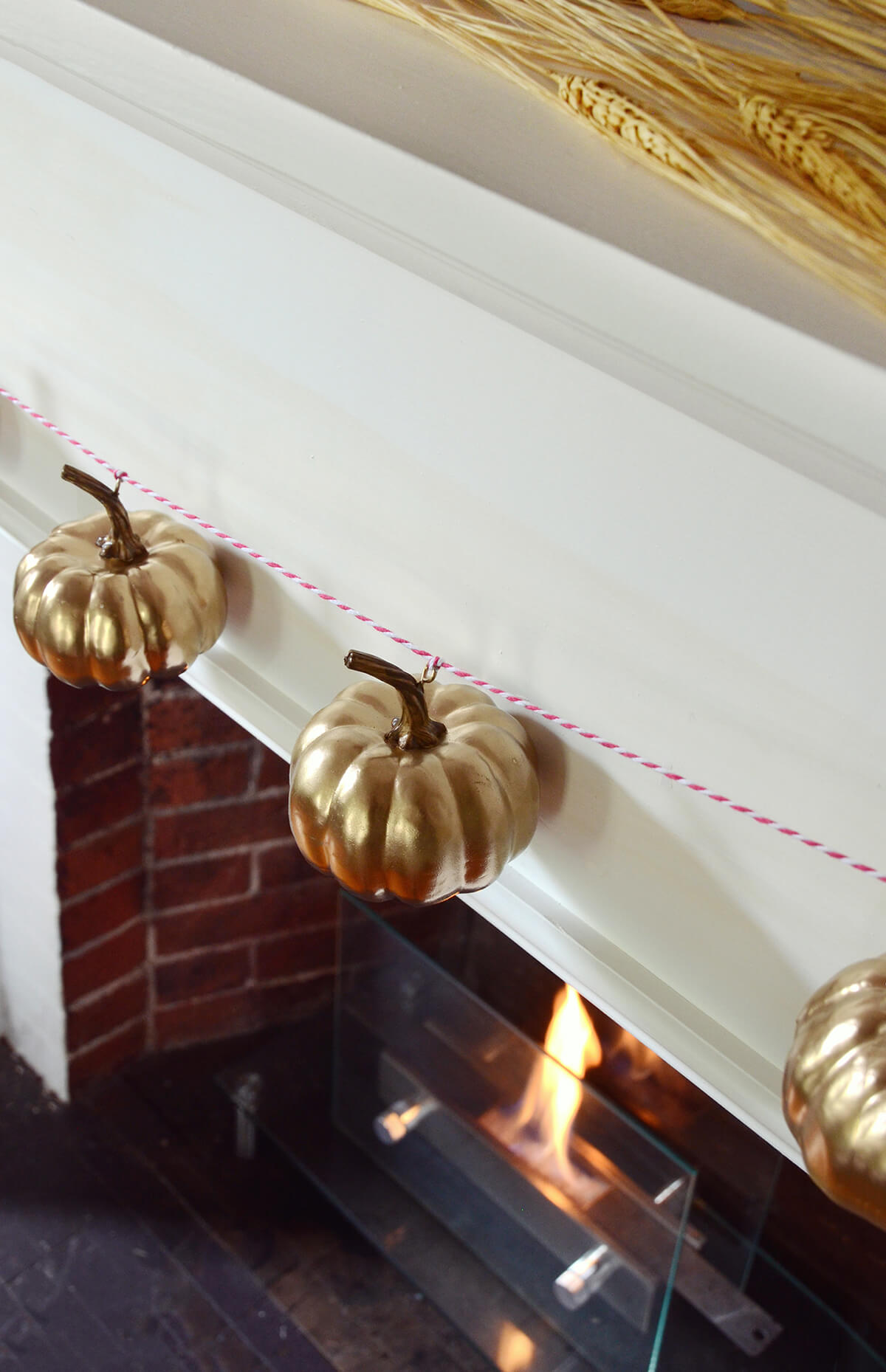 Citrouilles arborant un manteau doré brillant
