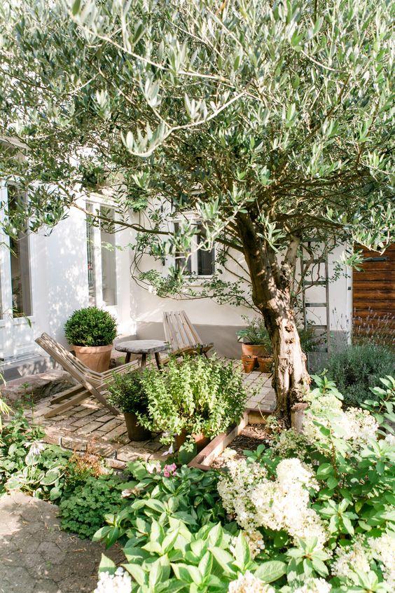 une petite cour arrière confortable avec un espace revêtu de briques, des chaises en bois et beaucoup de verdure et un arbre autour