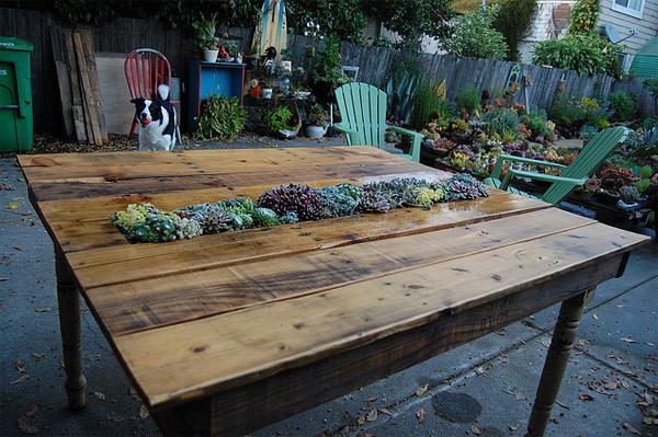 table de palette succulente