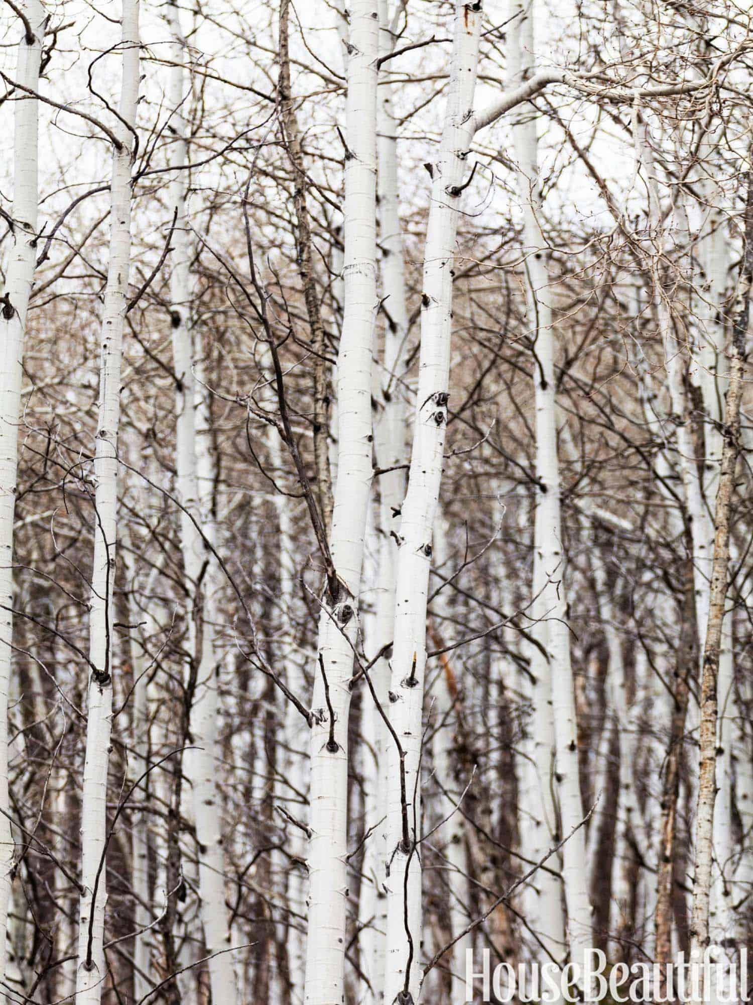 Cabane en rondins rustique-Thom Filicia-05-1 Kindesign