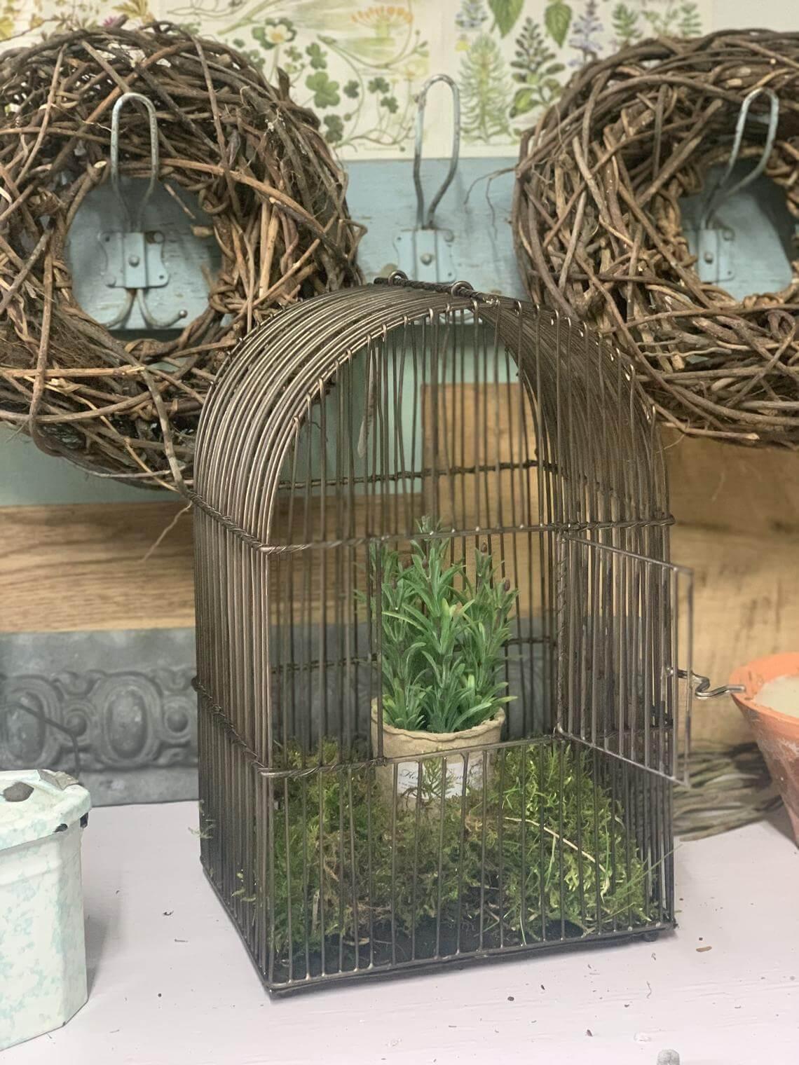 Cage à oiseaux en laiton en sourdine en mousse et jardin d'herbes