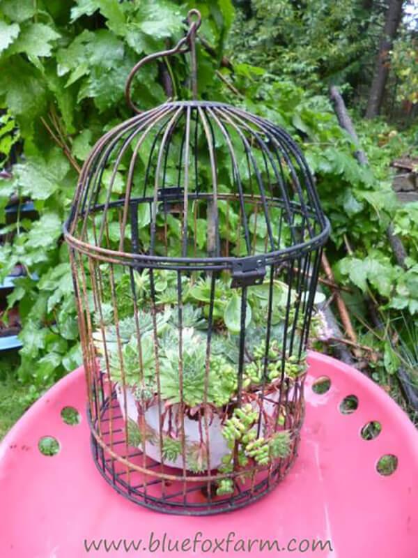 Affichage d'usine de cage à oiseaux en métal de table