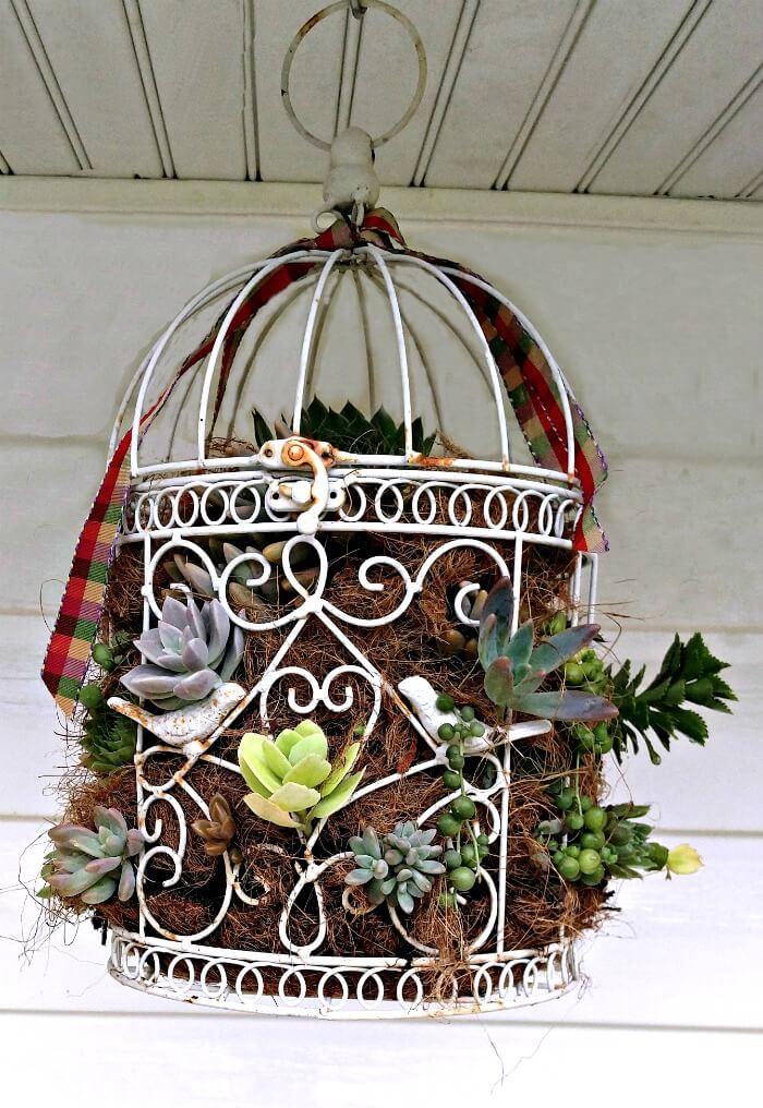 Jardinière suspendue en forme de cage à oiseaux succulente floraison