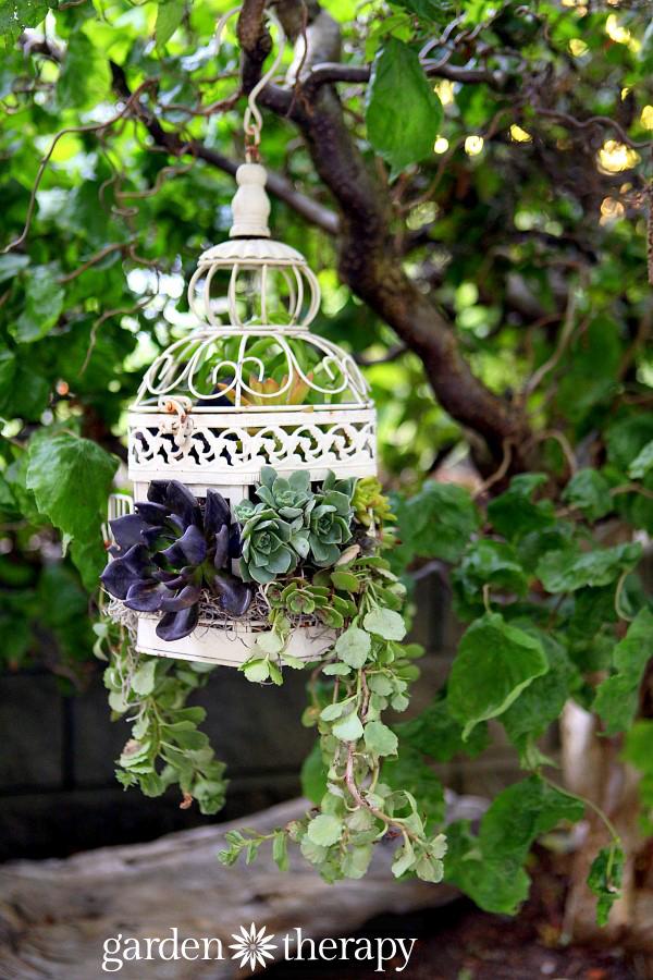 Planteurs de cage à oiseaux