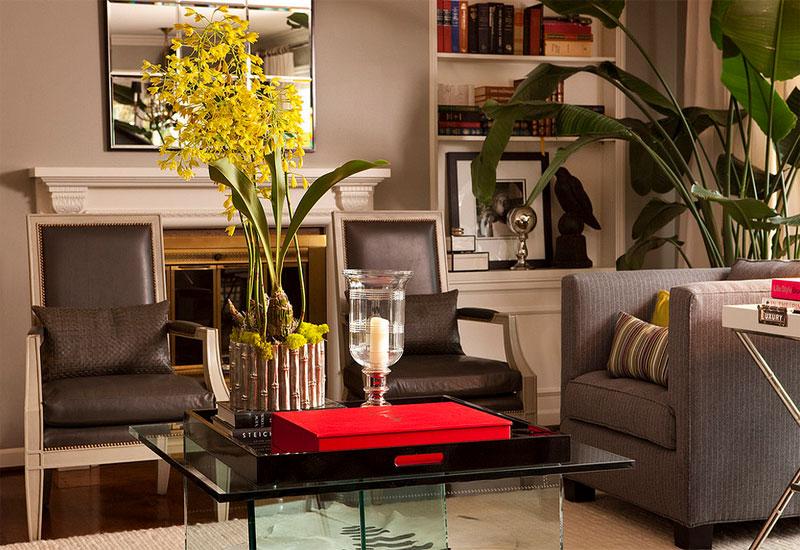 nicolai palmier décoration des plantes d'intérieur