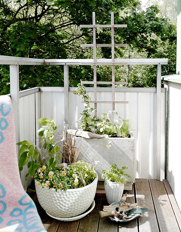 Plantes de balcon